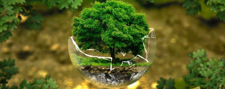 environment-regulatory-law