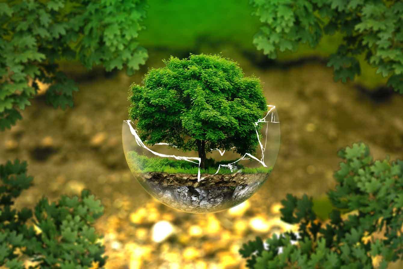 Environment & Regulatory Law